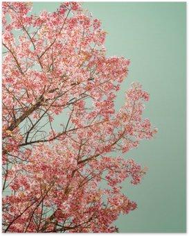 Poster Natuur achtergrond van de mooie van de boom kersen roze bloem in de lente - vintage pastel kleurfilter