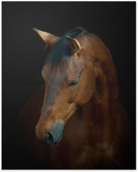 Poster Paard op zwart