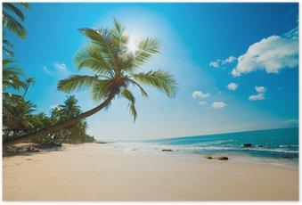 Poster Plage tropicale au soleil
