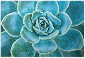 Poster Plante succulente laisse