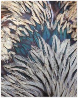 Poster Plumes colorées vives d'oiseaux