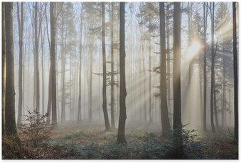 Poster Rayons de soleil à travers la forêt brumeuse