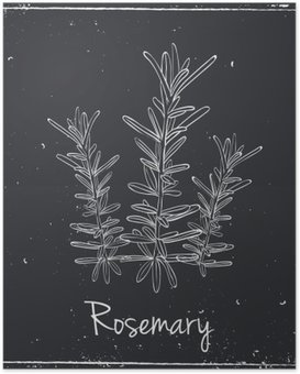 Poster Rosemary Herbes et épices.