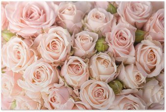 Poster Roses roses fond lumineux