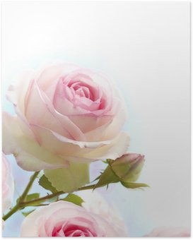 Poster Roze roos over blauwe witte achtergrond