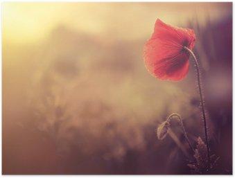 Poster Sauvage de fleur de pavot