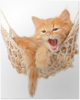 Poster Schattige roodharige kitten in hangmat