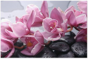 Poster Set van cattleyaorchidee bloem en steen met water druppels