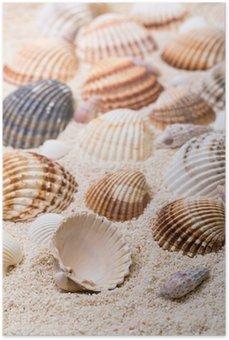 Poster Snäckskal med korallsand