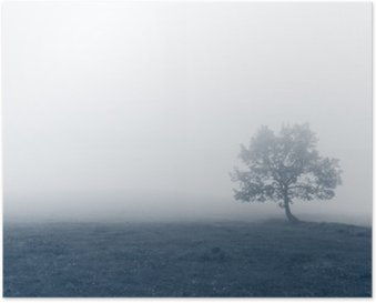 solitary tree with fog Poster