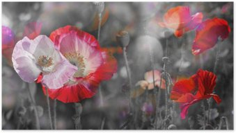 Poster Summer meadow avec coquelicots rouges