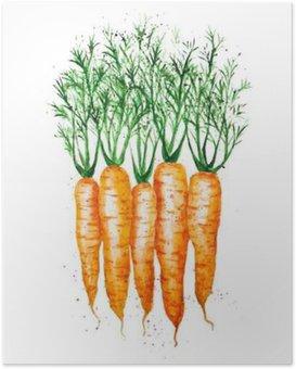 Poster Vector aquarelle carottes, isolé sur fond blanc