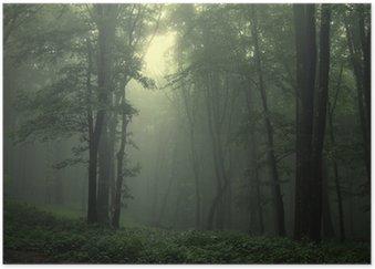 Póster Verde bosque después de la lluvia