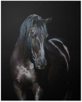 Poster Zwart paard geïsoleerd op zwarte achtergrond