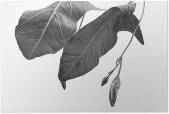Poster Zwart-wit macrophoto van plantaardige object met diepte van het veld