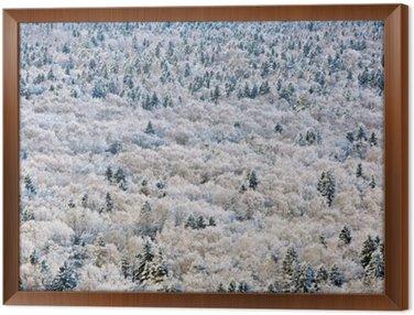 Quadro in Cornice Inverno foresta, regione di Tver, Russia.