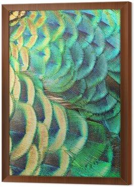 Quadro in Cornice Verde piume di pavone