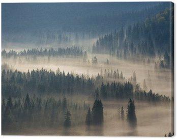 Quadro su Tela Abeti su un prato lungo la volontà di bosco di conifere in montagne nebbiose