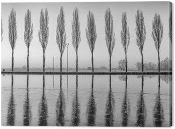 Quadro su Tela Alberi riflessi sul lago all'alba in bianco e nero