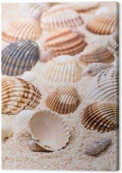 Quadro su Tela Conchiglie con sabbia corallina
