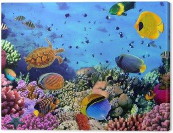 Quadro su Tela Foto di una colonia di corallo