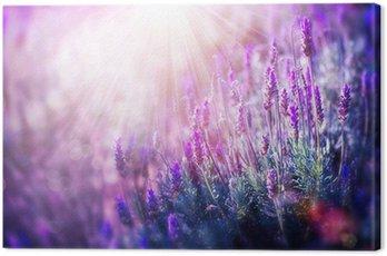 Quadro su Tela Lavanda fiori di campo. Crescita e fioritura della lavanda
