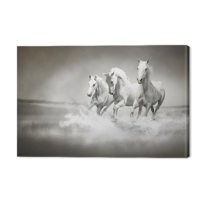 Quadro su Tela Mandria di cavalli bianchi in esecuzione attraverso ...