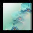 Quadro su Tela Orchidea fiore sfondo
