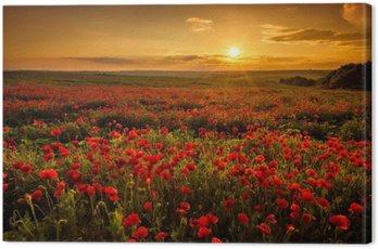 Quadro su Tela Papavero di campo al tramonto