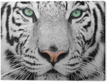 Quadro su Tela White tiger