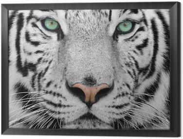 Quadro com Moldura white tiger