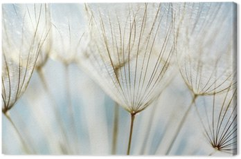 Quadro em Tela Abstract dandelion flower background