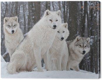 Quadro em Tela Arctic Wolf Pack