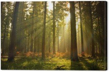 Quadro em Tela Beautiful Forest