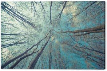 Quadro em Tela Fundo das árvores Web