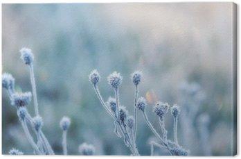 Quadro em Tela Fundo natural abstrato da planta congelada coberta com o hoarfrost ou rime