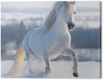 Quadro em Tela Galloping white horse