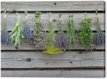 Quadro em Tela Herbs drying on the wooden barn in the garden