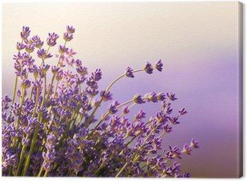 Quadro em Tela Lavender flowers bloom summer time