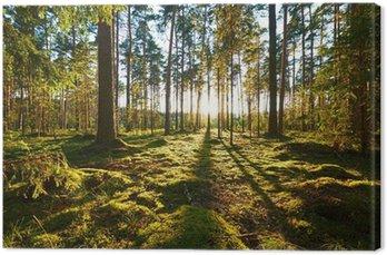 Quadro em Tela Nascer do sol na floresta do pinho