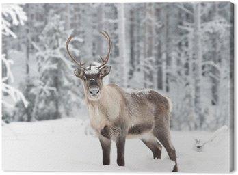 Quadro em Tela reindeer
