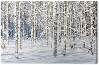 Quadro em Tela Snowy birch trunks