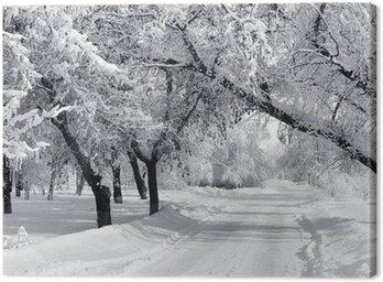 Quadro em Tela Winter park, scenery