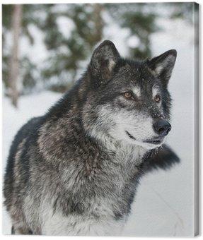 Quadro em Tela Wolf