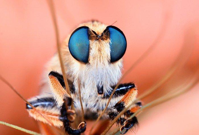 Obraz na Płótnie Roberfly - Zwierzęta