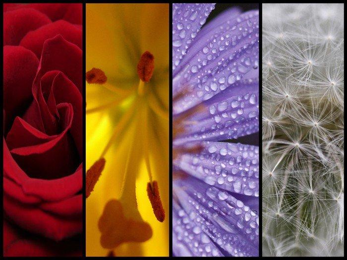 Obraz na Płótnie Różni się kolorem kwiatów - Pory roku