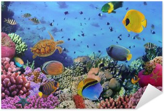 Samolepicí Plakát Fotografie z korálového kolonie