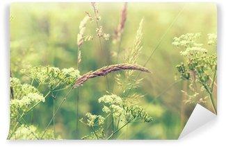 Selbstklebende Fototapete Blühende Wiese