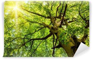 Selbstklebende Fototapete Die Sonne scheint durch die Bäume