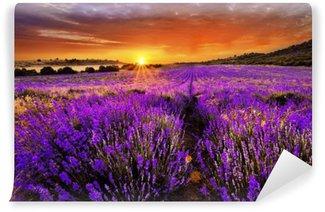 Selbstklebende Fototapete Lavendelfelder